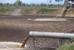 Riau-AS Rencanakan Produksi 205 MW Energi Biomassa