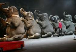 Moskow Sirkus Hibur Pekanbaru