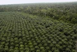 Riau Kekurangan 39 Pabrik Kelapa Sawit